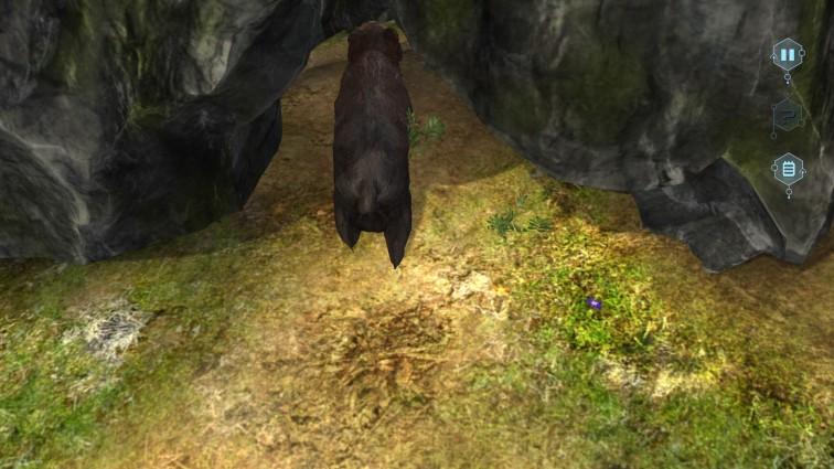 Run Bear Run!!!!